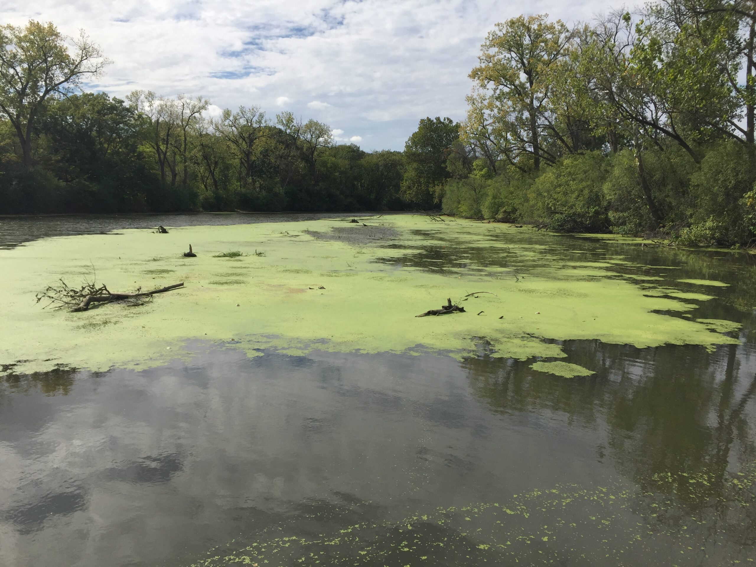 Algae covers the surface of the water