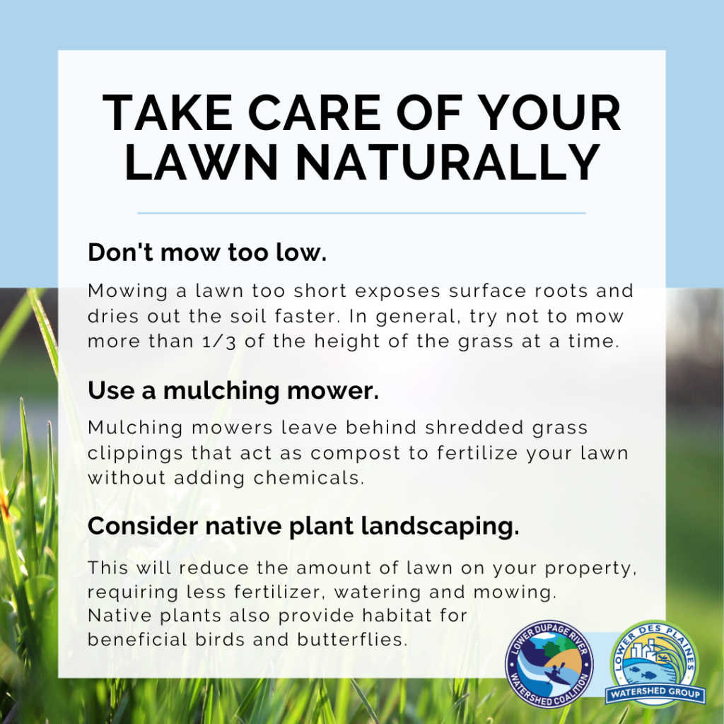 Graphic tips for natural lawn care